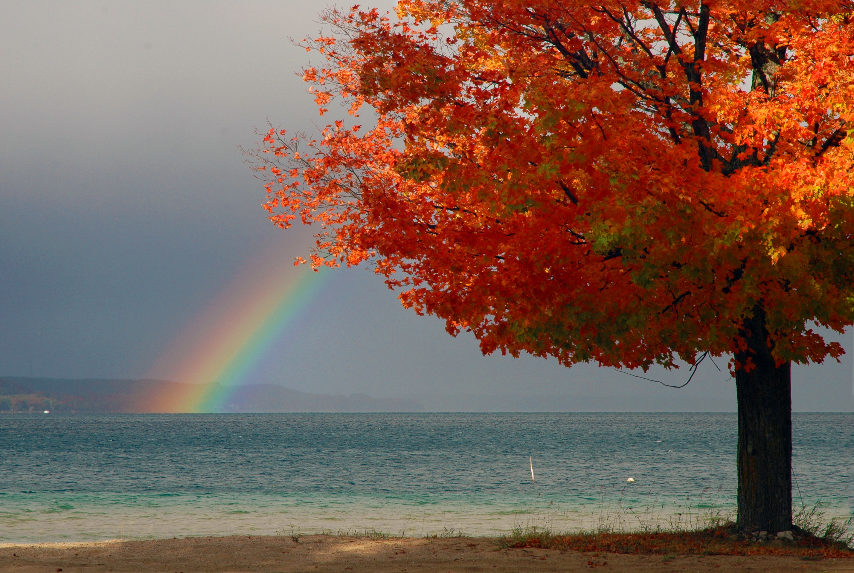 Rainbow over Red Maple Tree and Suttons Bay